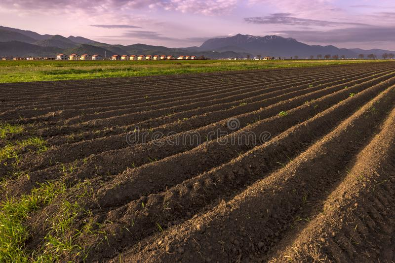 Plowed field of crops in the spring evening light, prepared to be sown. With beautiful village and misty mountains in the background stock images