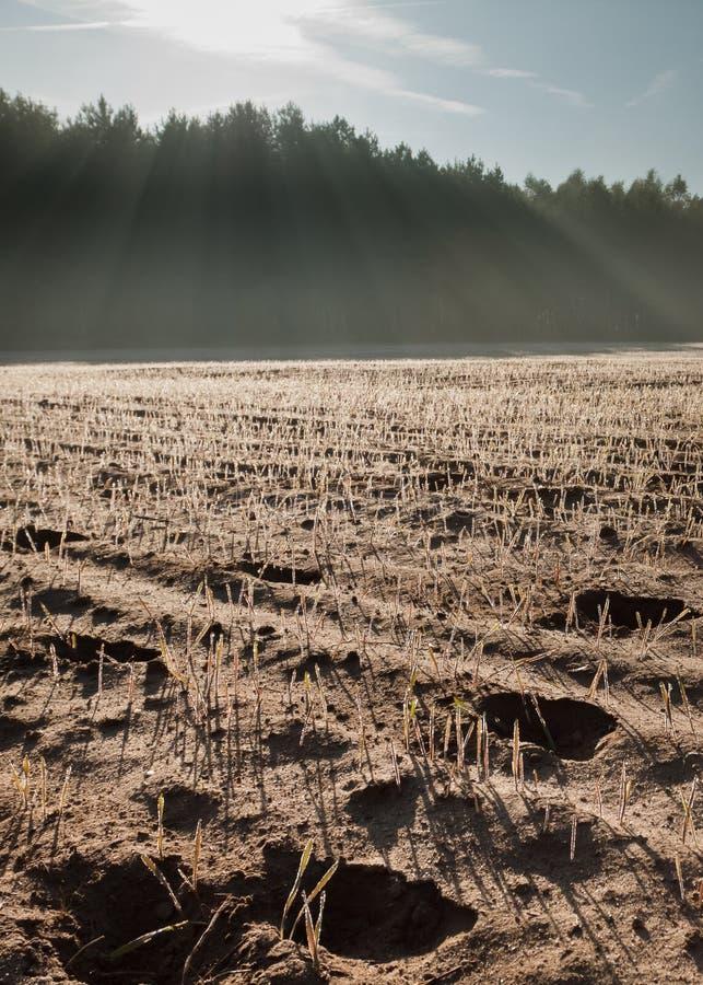Plowed land at sunrise stock photo