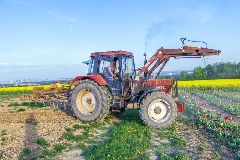 Plowes del granjero el campo del tulipán foto de archivo