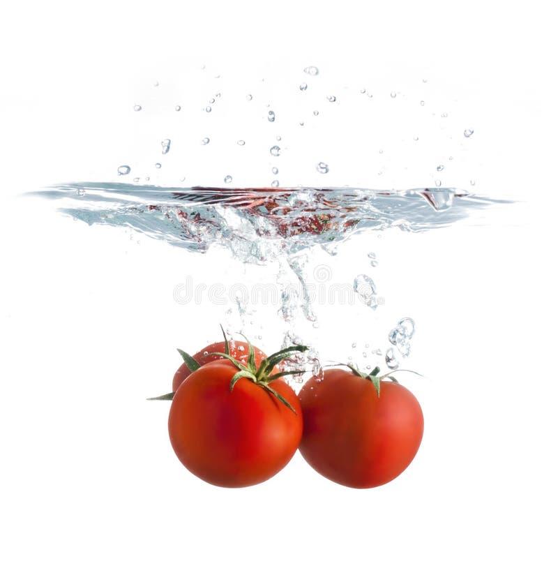 pluśnięcie pomidor fotografia stock