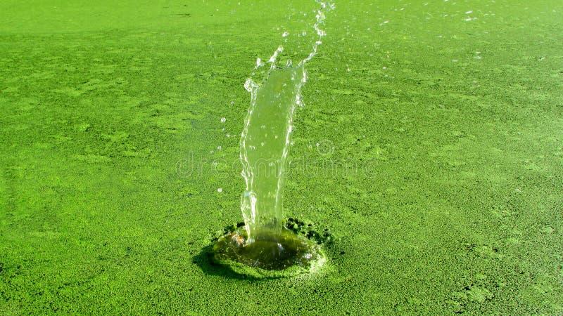 Pluśnięcie woda podczas gdy rzucający kamień zdjęcie stock