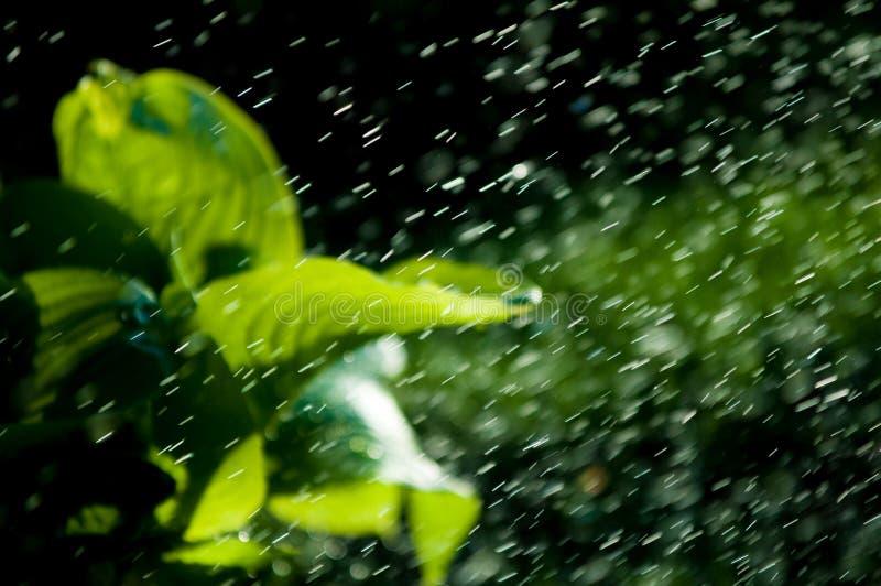 Pluie d'été l'humidité a condensé de l'atmosphère qui tombe v photo libre de droits