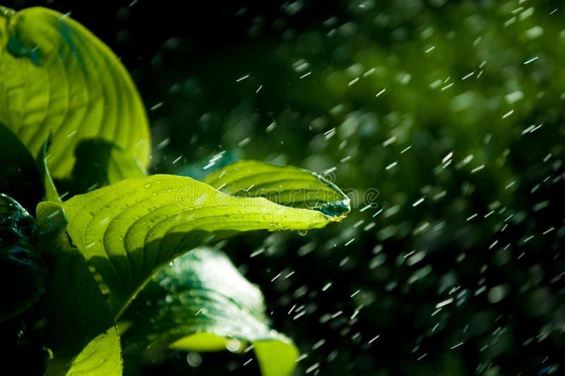 Pluie d'été l'humidité a condensé de l'atmosphère qui tombe v images libres de droits
