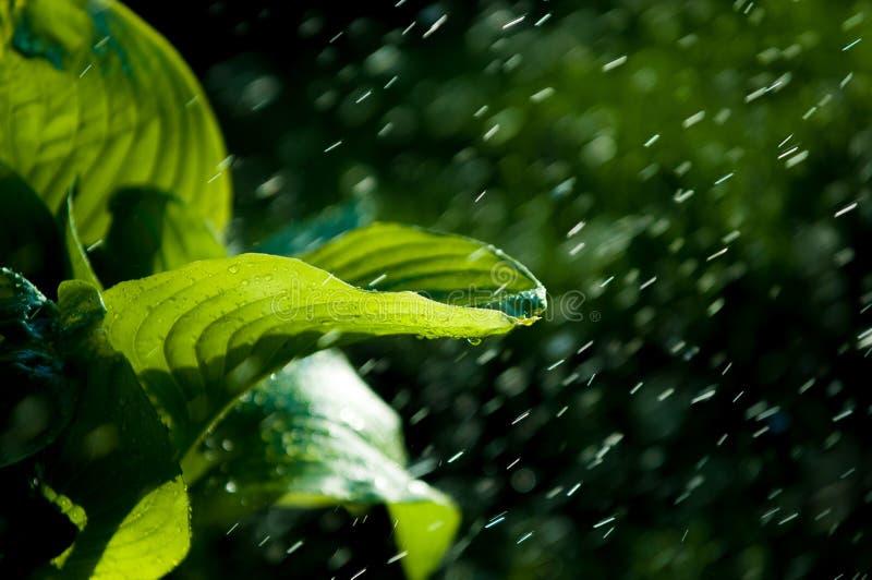 Pluie d'été l'humidité a condensé de l'atmosphère qui tombe v photos stock