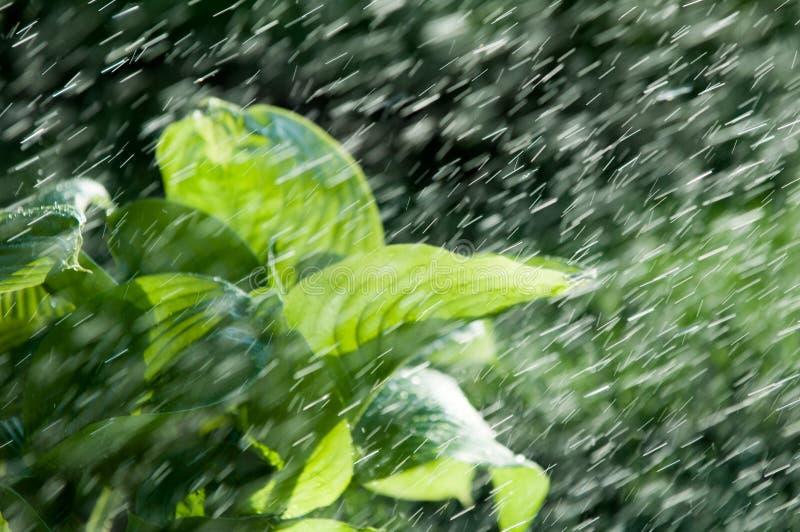 Pluie d'été l'humidité a condensé de l'atmosphère qui tombe v image stock