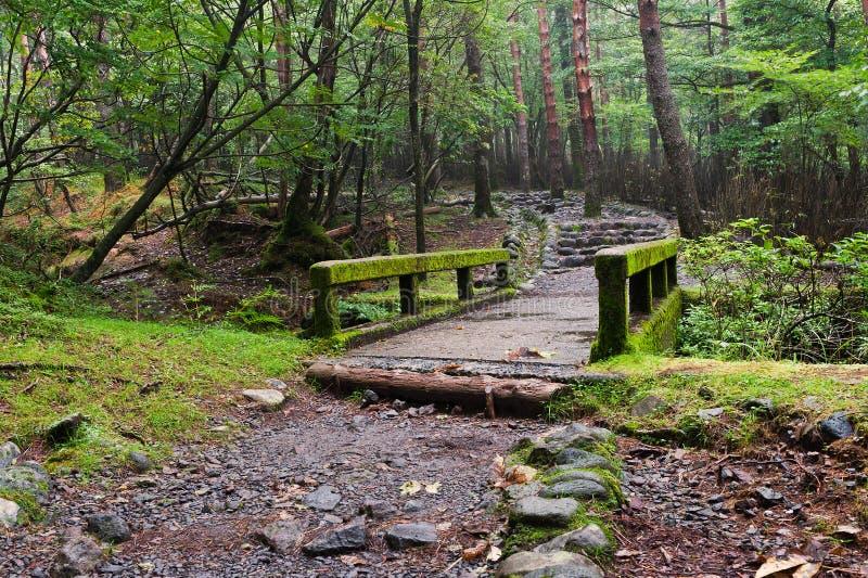Pluie en montagnes de Kirishima photos libres de droits
