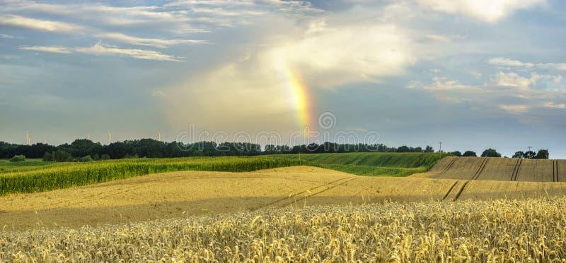 Pluie et arc-en-ciel d'été au-dessus du champ photo libre de droits