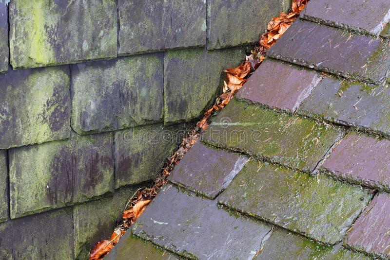 Pluie et moule sur des ardoises de toit photo stock