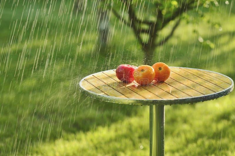 Pluie et tomates d'été images stock