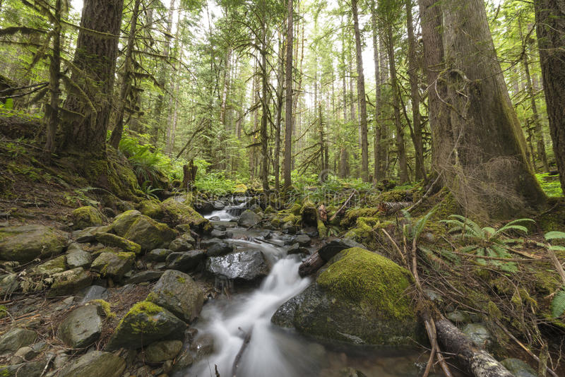 Pluie Forest Pacific North West photos stock