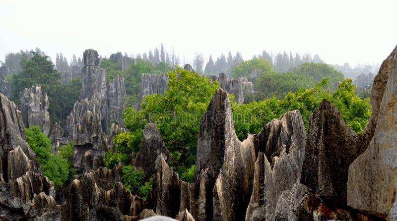 Pluie, la forêt en pierre images stock