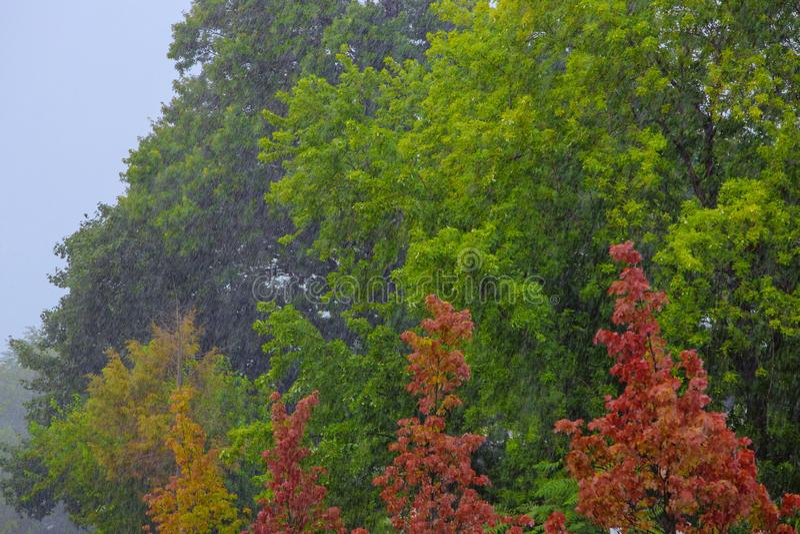 Pluie se renversante lourde au-dessus de temps vert d'automne de déluge de tempête de pluie d'arbres images libres de droits