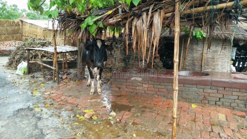 Pluies dans le village photo stock