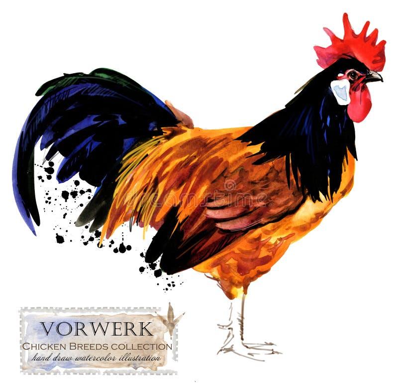 Pluimveehouderij De reeks van kippenrassen binnenlandse landbouwbedrijfvogel vector illustratie