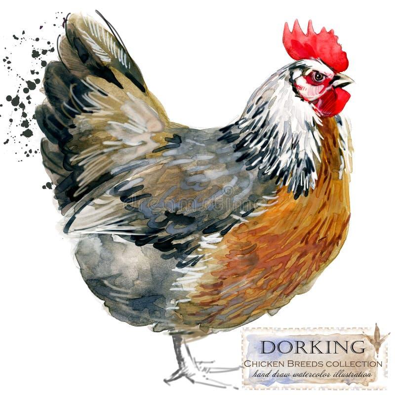 Pluimveehouderij De reeks van kippenrassen binnenlandse landbouwbedrijfvogel stock illustratie