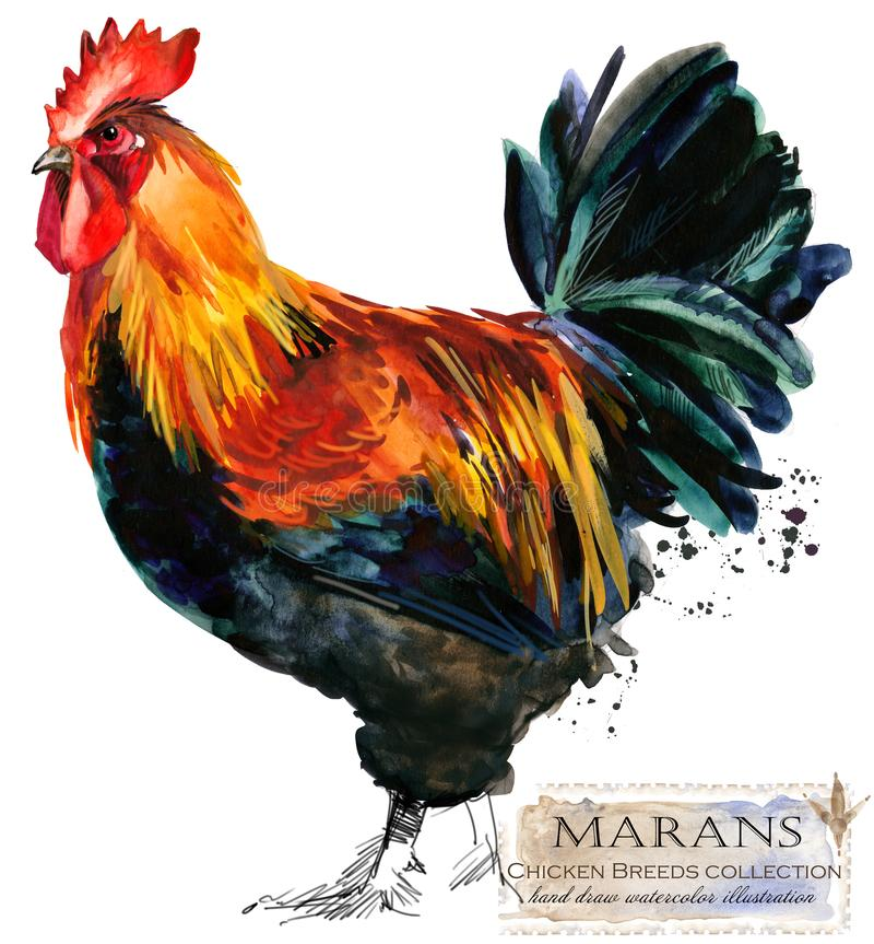 Pluimveehouderij De reeks van kippenrassen binnenlandse landbouwbedrijfvogel royalty-vrije illustratie
