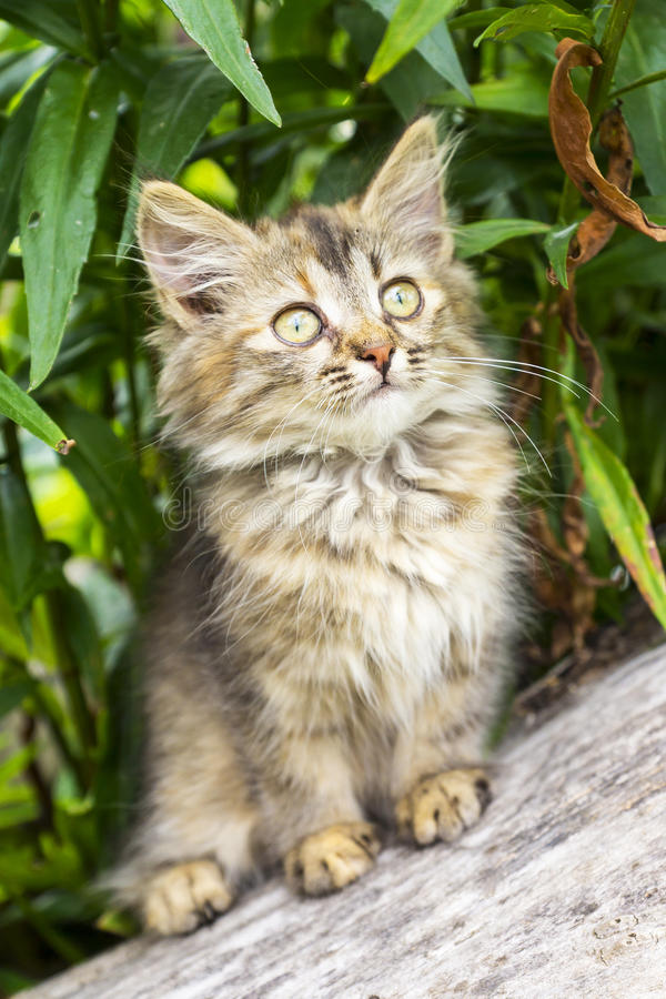 Pluizig grijs katje in een boom royalty-vrije stock foto