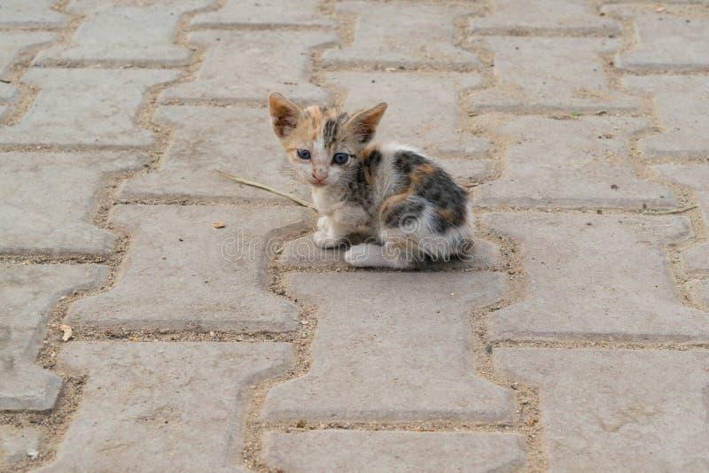 Pluizige daklozen, weinig grijs katje met blauwe ogen Een eenzaam katje op de muur stock afbeeldingen