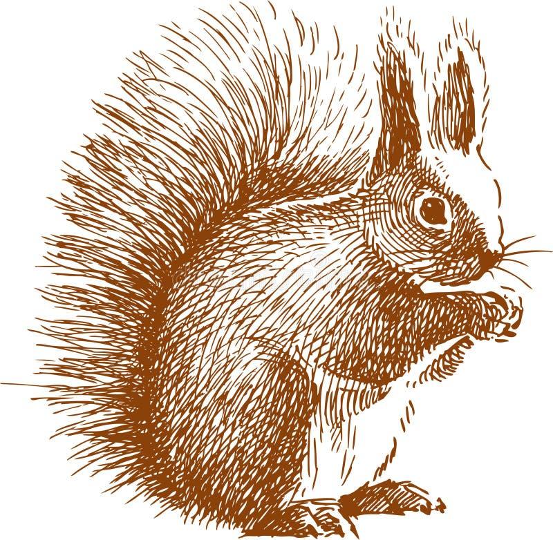 Pluizige eekhoorn royalty-vrije illustratie