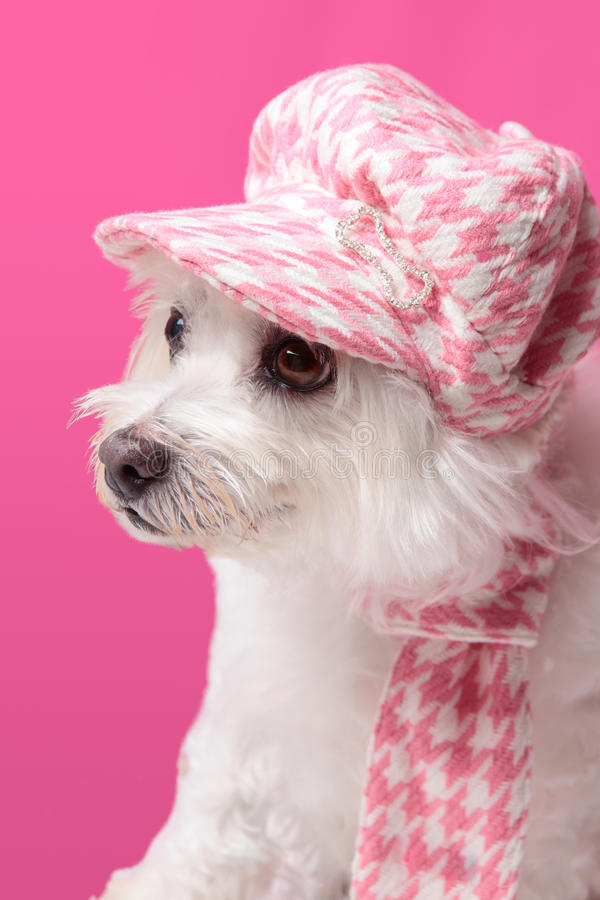 Pluizige hond die de wintermanier draagt stock afbeelding
