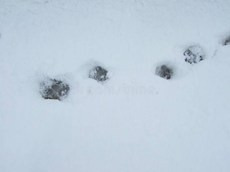 Pluizige witte sneeuw Voetafdrukken in de sneeuw stock fotografie