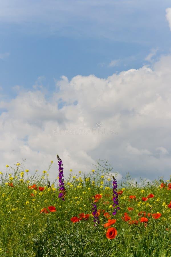 Pluizige wolken over wildflowergebied royalty-vrije stock afbeelding