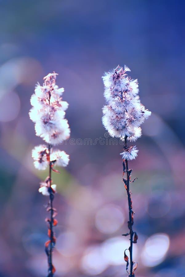 Pluizige zachte gebieds wilde bloemen stock foto