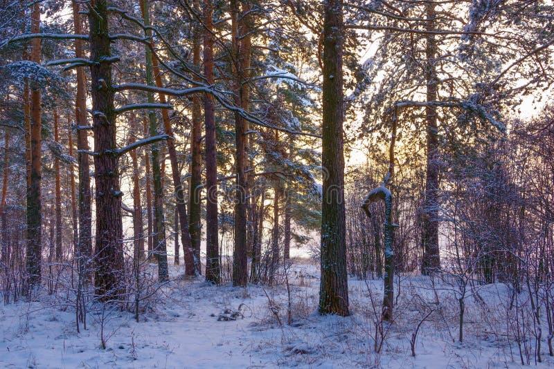 Plumón brumoso del frío escarchado fotografía de archivo