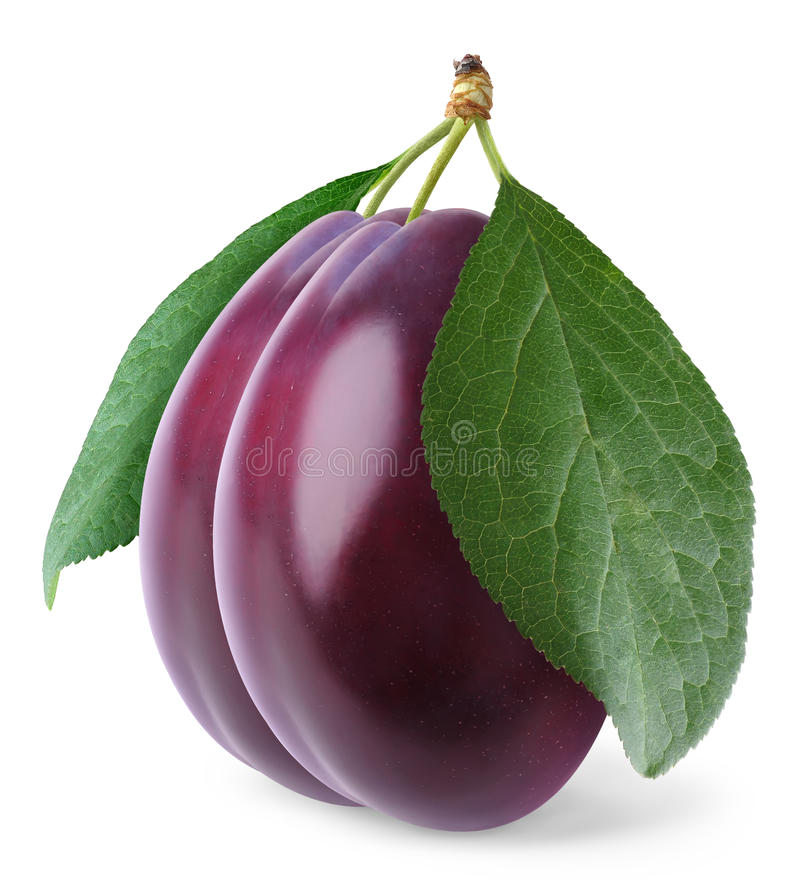 Isolated plums stock photography