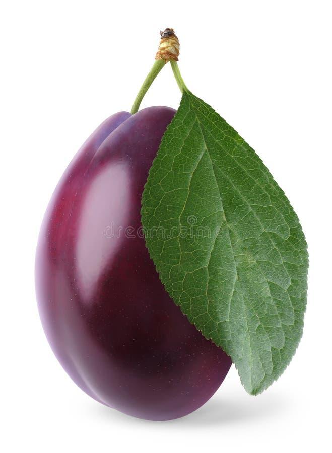 Isolated plum royalty free stock photo