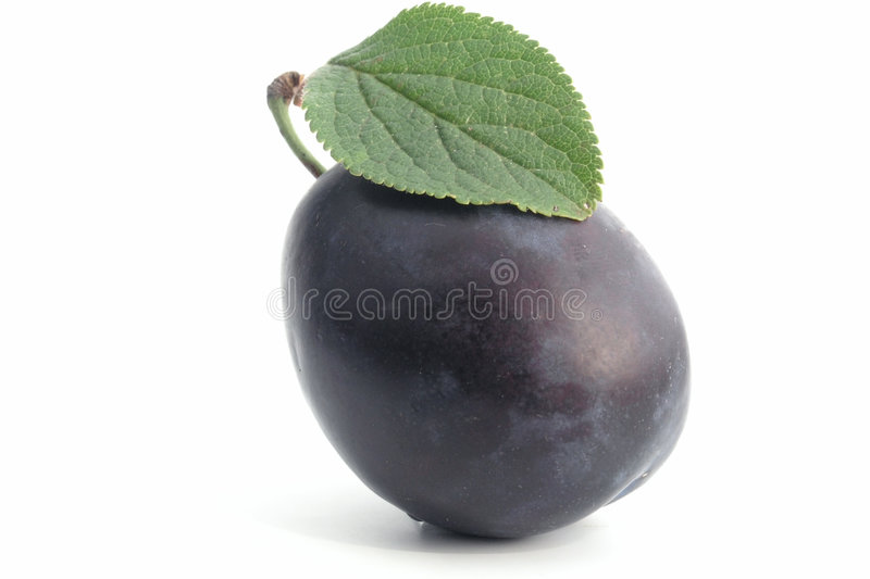 plum obrazy stock