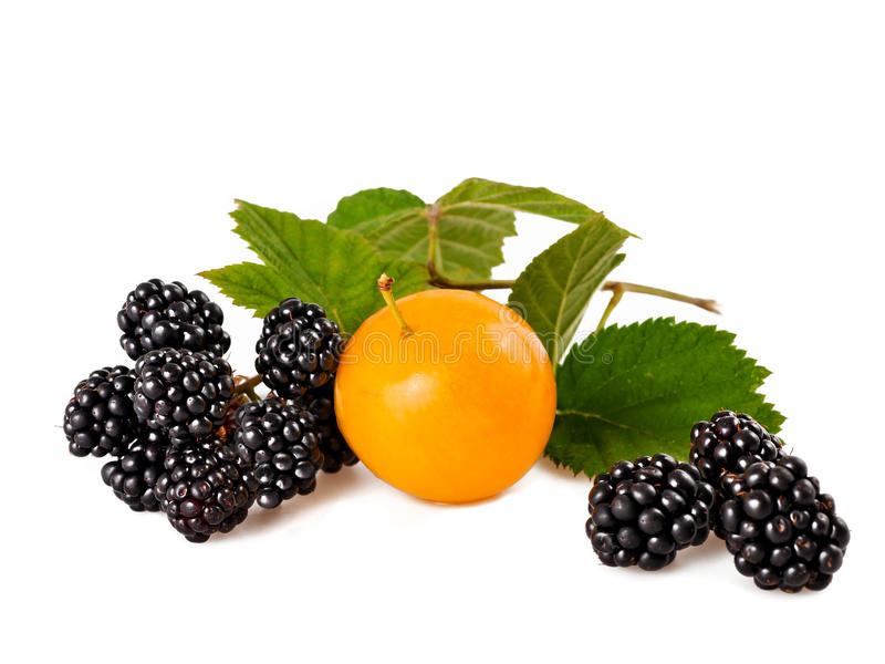 Plum and blackberry stock images