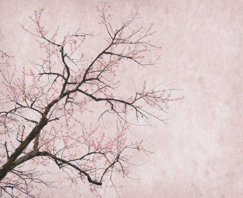 Download Plum Blossom On Old Antique Vintage Paper Stock Image - Image: 36285381