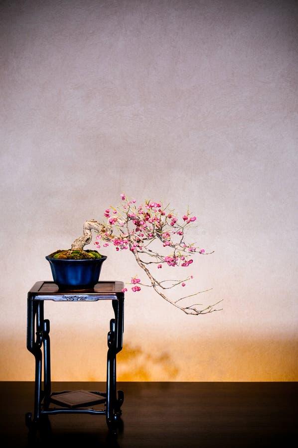 Plum Bonsai no jardim do museu dos bonsais de Omiya, Saitama, Japão imagem de stock royalty free
