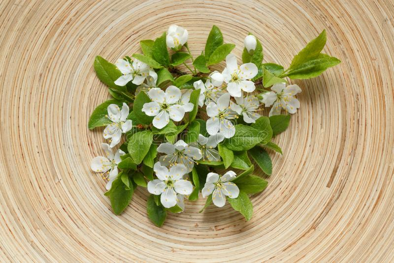 Plum flowers on wooden plate. stock photo