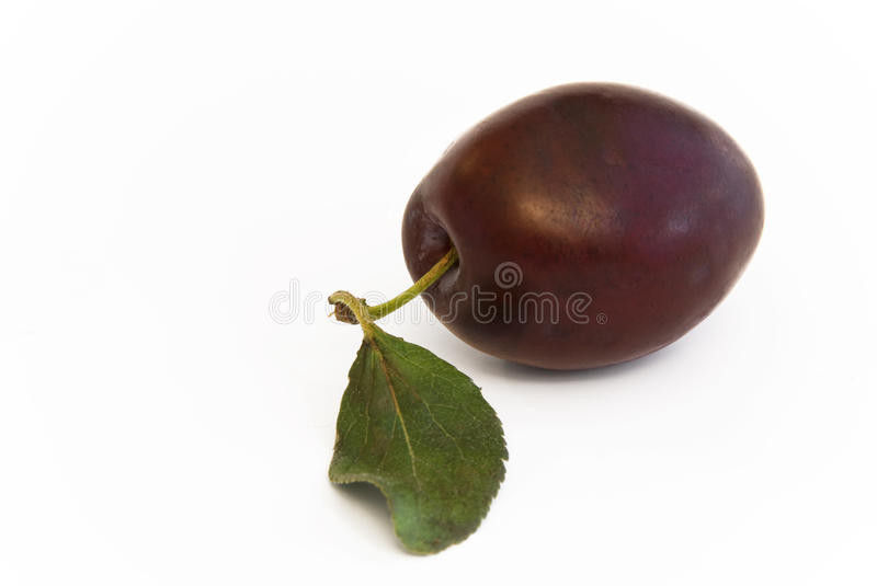 Plum fruit with leaf. Single plum fruit with green leaf stock image