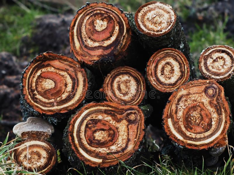 Wood cut lots of circles from annual rings royalty free stock photography