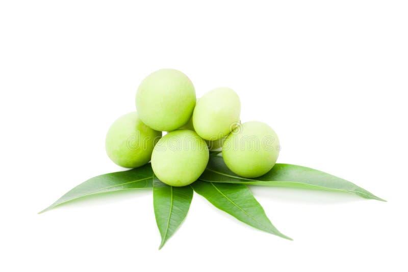 Plum Mango- oder Marian Plum-Früchte Bouea-macrophylla Griffith stockfotos