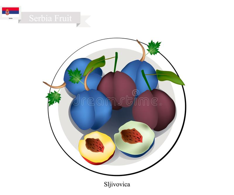 Plum, One of The Most Popular Fruit in Serbia. Serbia Fruit, Dried Plum. One of The Most Famous Fruits of Serbia stock illustration