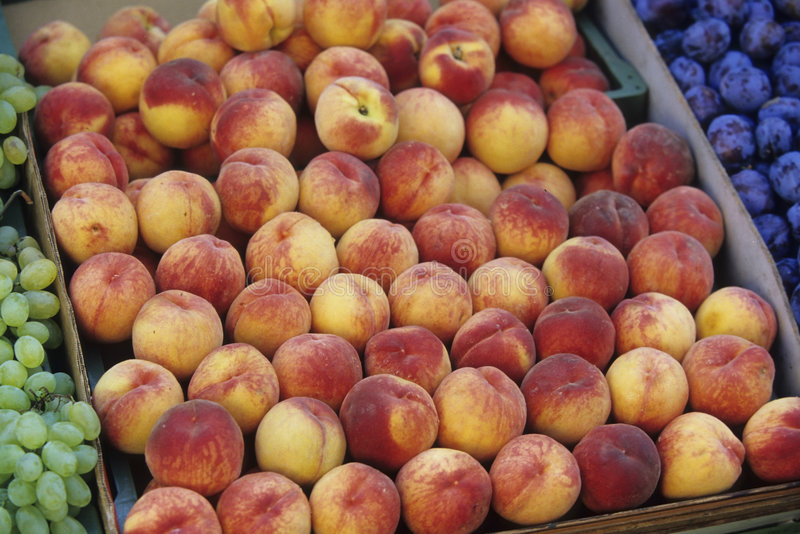 Plum and peaches stock photo