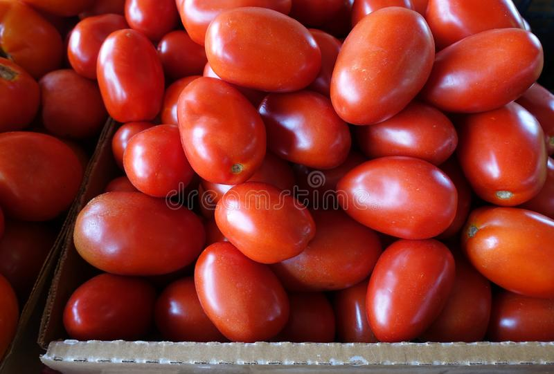 Plum Tomatoes for Sale at a Farmers Market. Plum Tomatoes for Sale at an Outdoor Farmers Market royalty free stock images
