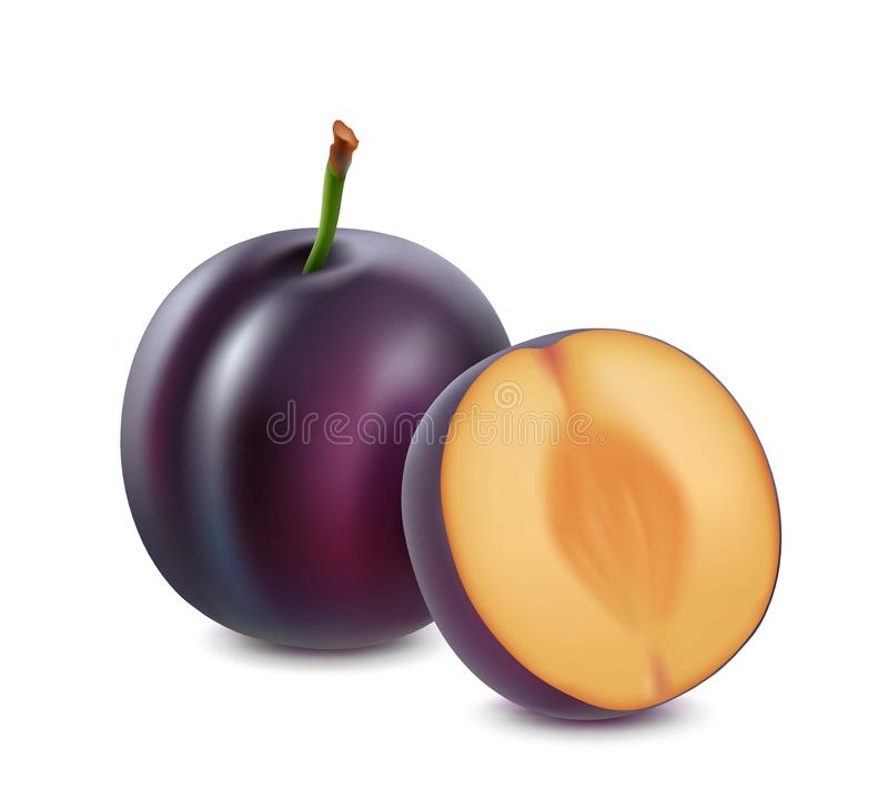 Plum on a white background. 3d vector realistic. stock illustration