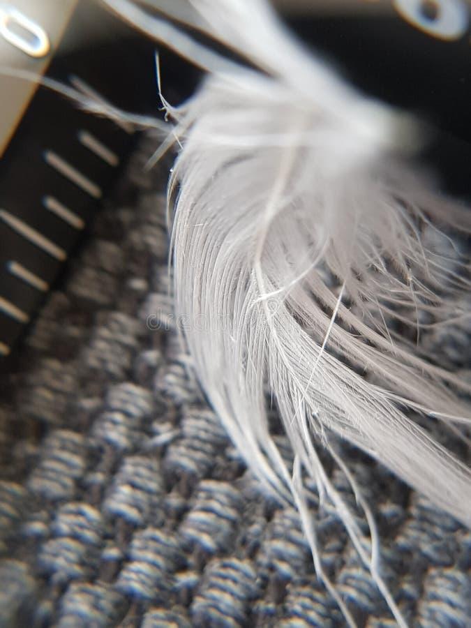 Pluma foto de archivo