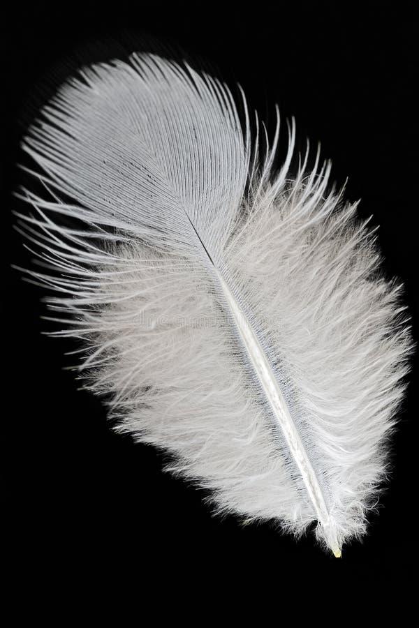 Pluma foto de archivo libre de regalías