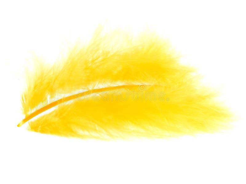 Pluma amarilla en blanco fotos de archivo