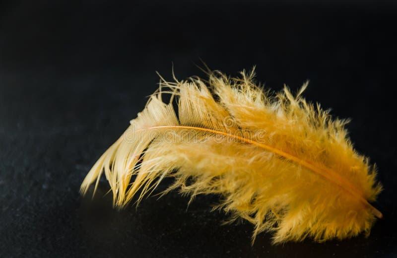 Pluma amarilla en un fondo oscuro fotografía de archivo