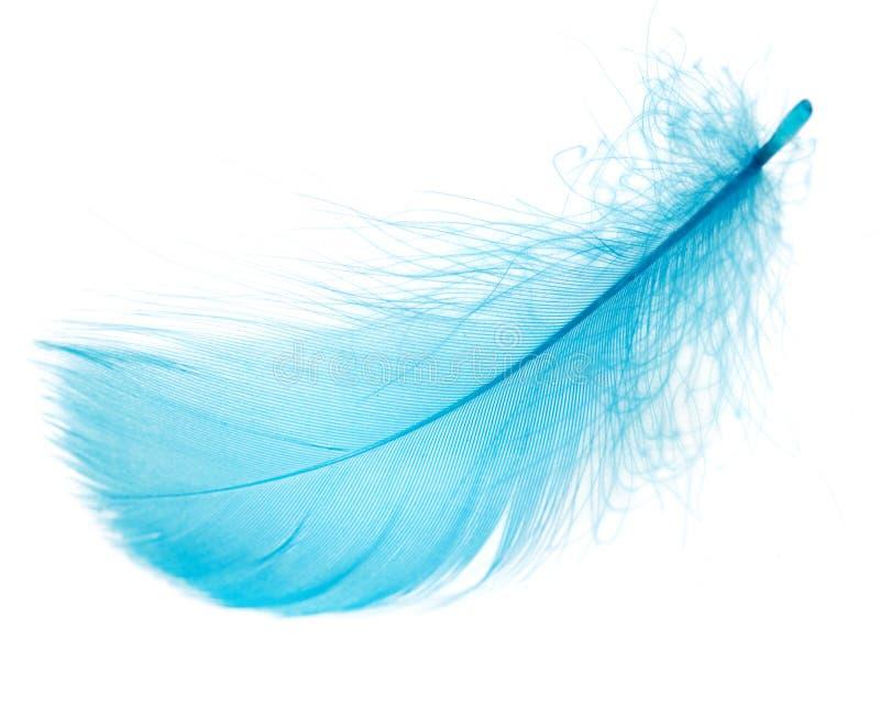 Pluma azul hermosa en el fondo blanco imagenes de archivo