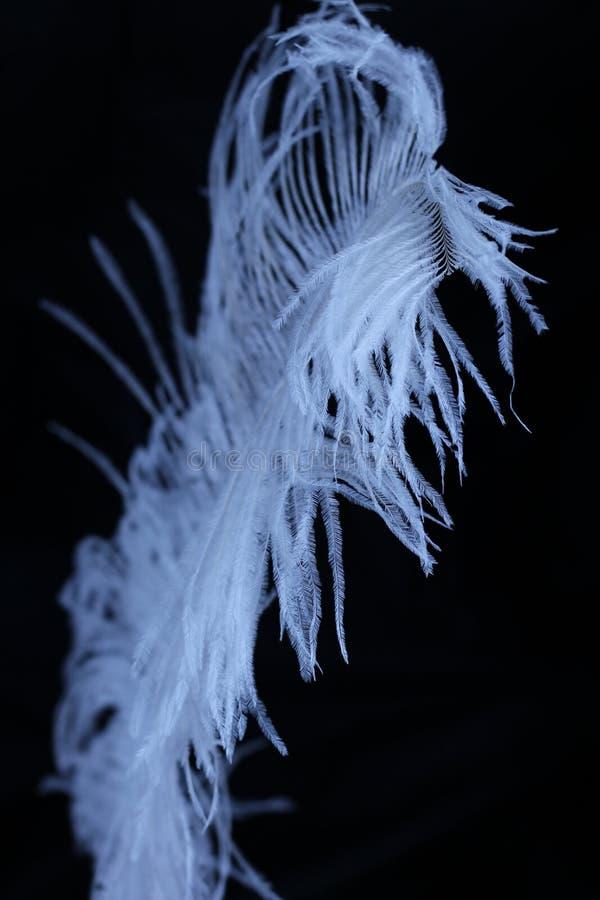 Pluma blanca en fondo negro imagenes de archivo