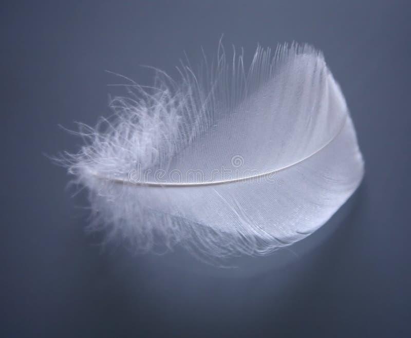 Pluma blanca suave foto de archivo
