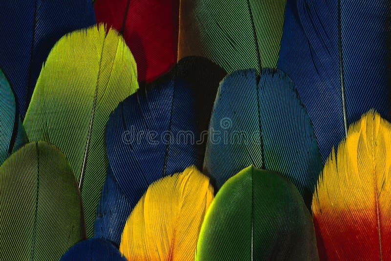 Pluma colorida fotos de archivo